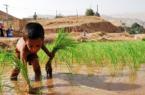 برای آینده کشاورزان در شرایط خشکسالی خوزستان باید برنامه داشت