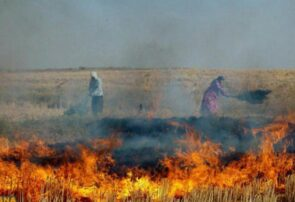 برخورد قضایی در انتظار کشاورزانی که مزارع خود را پس از برداشت می سوزانند